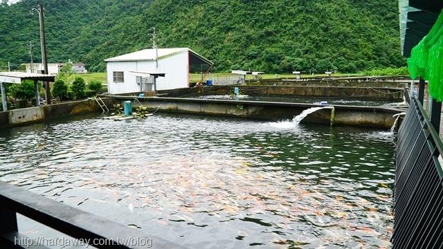 大坑休閒魚場