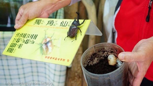 甲蟲生態展覽館
