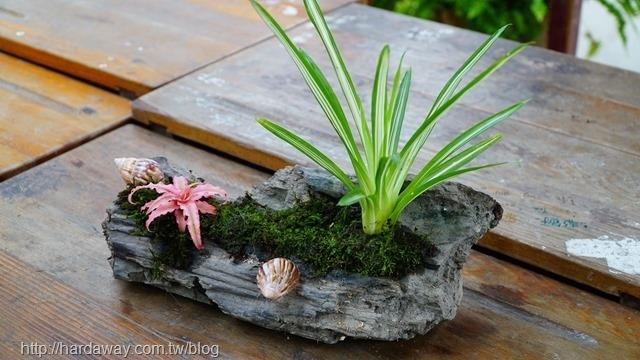 漂流木盆栽DIY