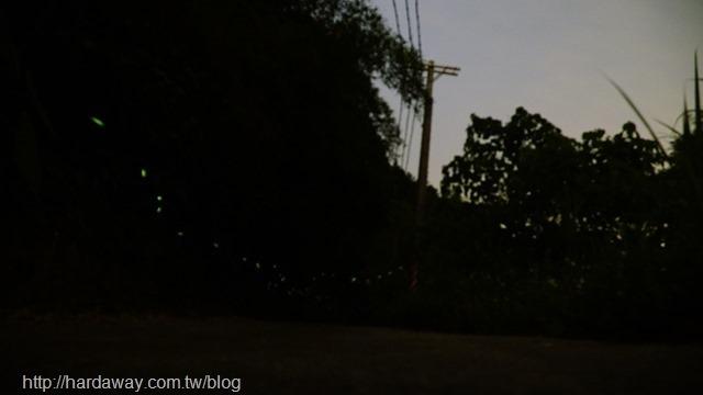 南庄看螢火蟲