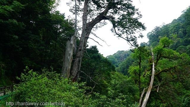 拉拉山自然保護區園區
