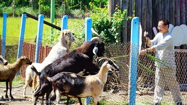 可達休閒羊場