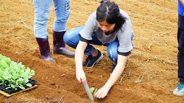樂采豐農園農事體驗