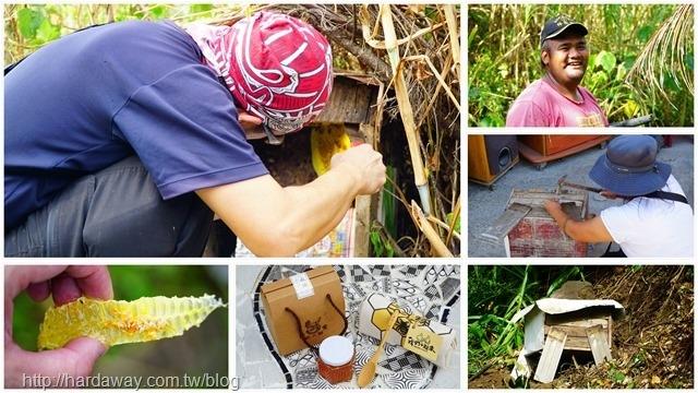 南田原始人野蜂採蜜一日遊