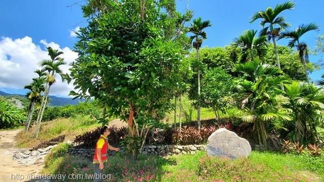 泰源百年咖啡老樹