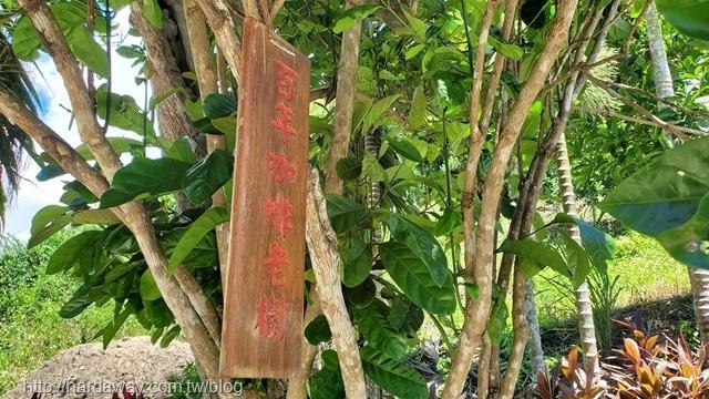 台東百年老樹