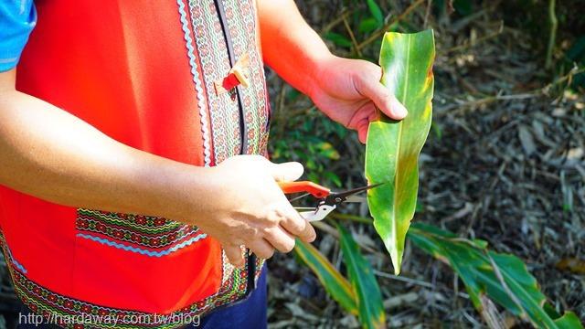 台東泰源咖啡農事體驗