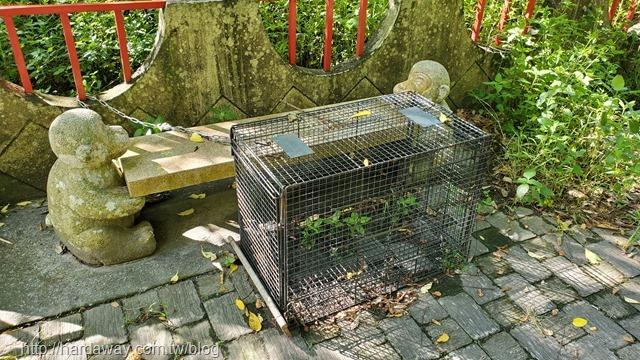 泰源幽谷看台灣彌猴