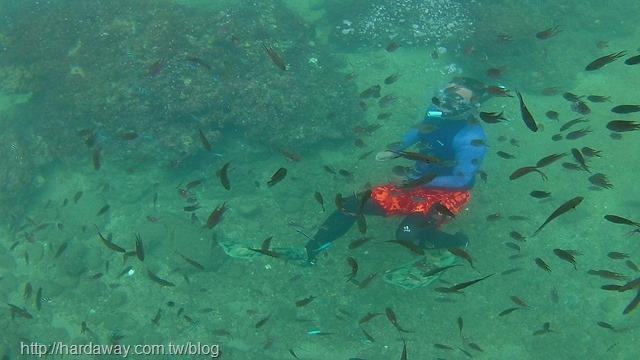 潮境海灣資源保育區復育