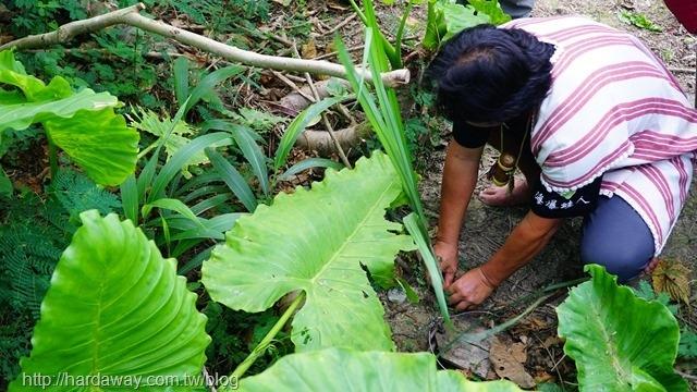 泰雅獵人狩獵體驗