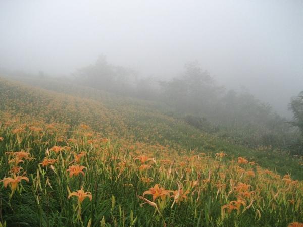 太麻里金針山