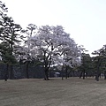 R0014795.JPG