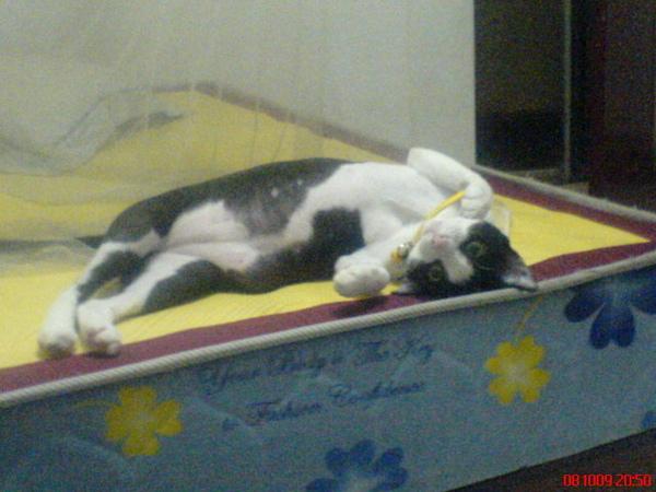 招財貓睡姿,沒看過躺著的招財貓吧