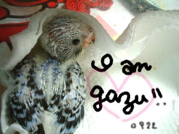 鸚鵡 068.jpg