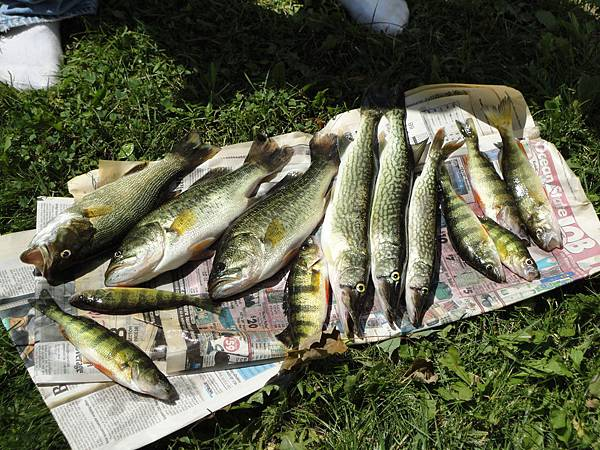 It took me long time to clean these fish and cooked them.