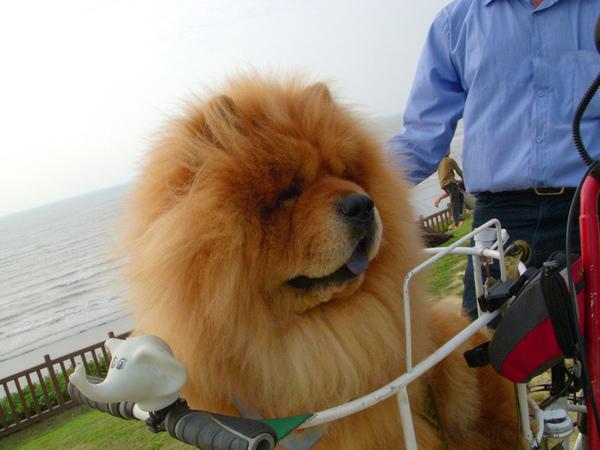 17km海岸線~路人的狗