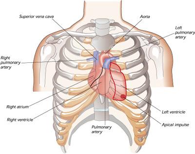 心臟3.jpg