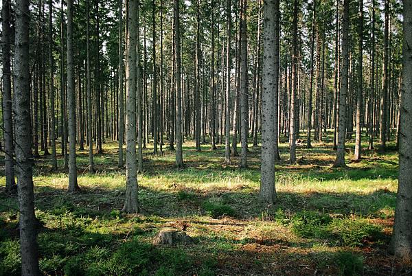 《眼睛》ch.5 Forest