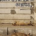 India trip_025
