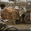 India trip_079