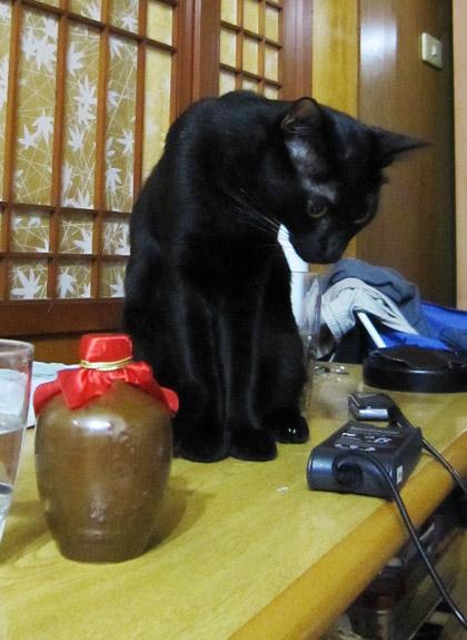2010.11.14 八角 & 高梁.jpg