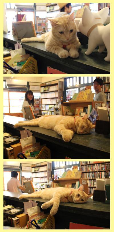 20120904 時光‧慵懶店貓