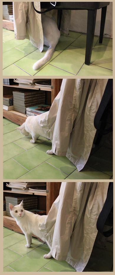 20120904 時光‧活潑白色店貓