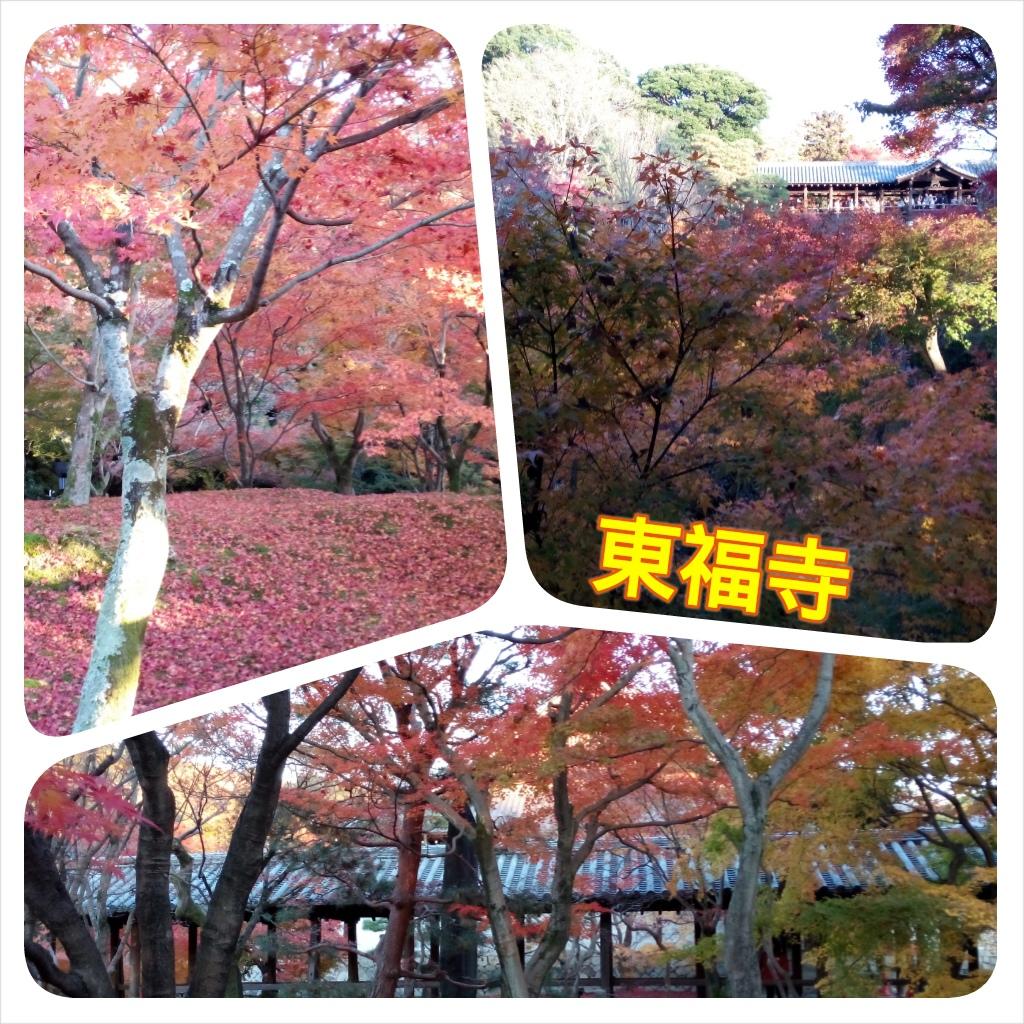 20141127 東福寺