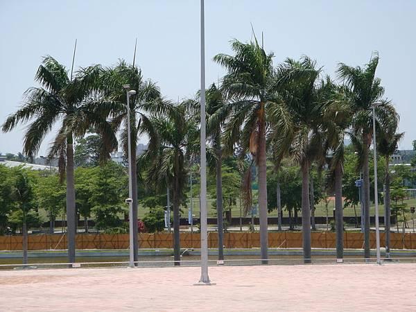聖火台造型與耶椰子樹輝映.JPG