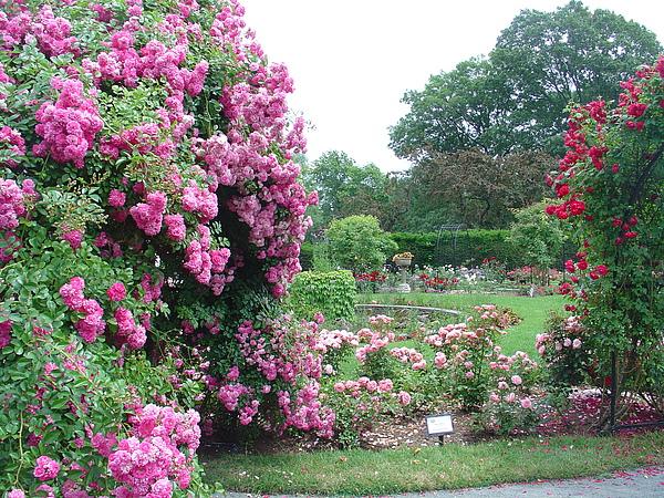 爭奇鬥艷的玫瑰花園
