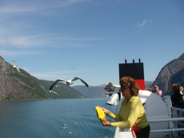 遊峽灣餵海鷗