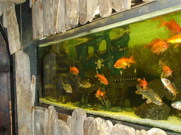 這些魚怎麼都很白目