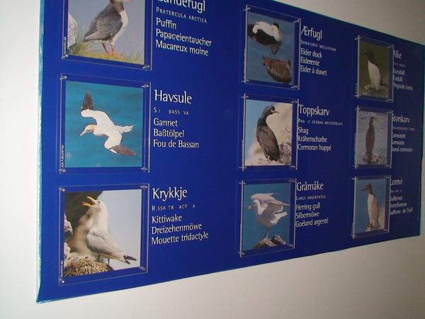 珍貴的鳥類照片