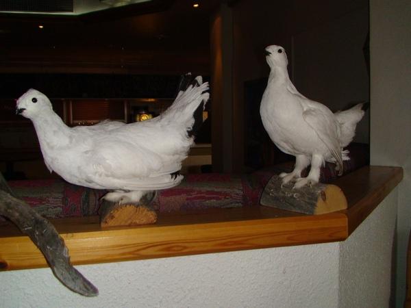 代表當地鳥類的標本