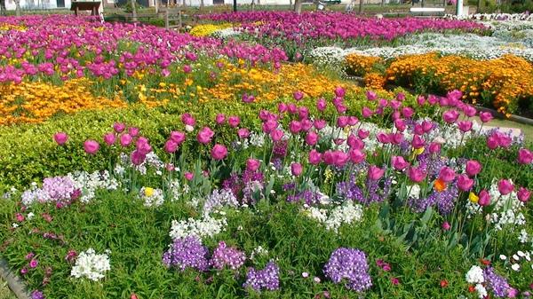 美麗的花多呈獻給您致上最高的敬意