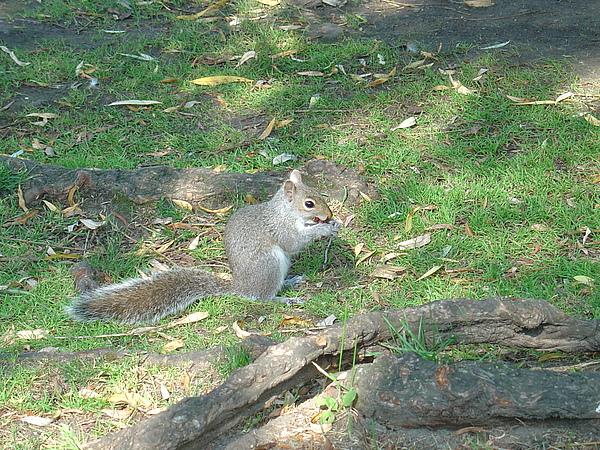 可愛的松鼠