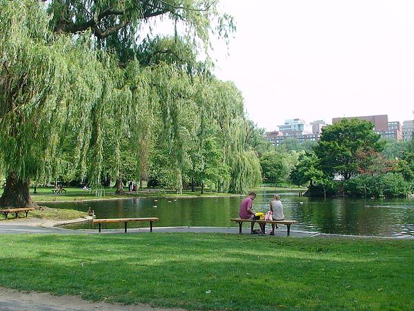 湖邊垂柳綠意盎然