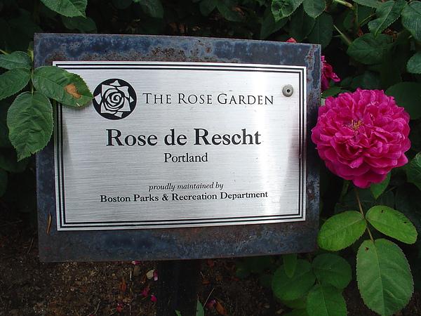 標示清楚的各種玫瑰