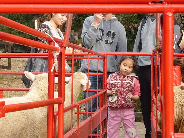 20101205-060 清境農場.JPG