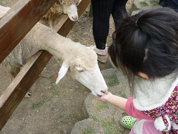 20101205-084 清境農場.JPG