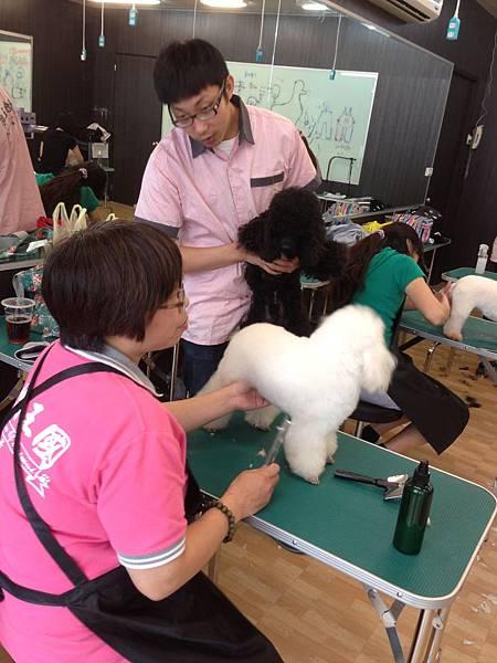 動物王國寵物美容學苑