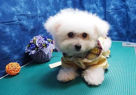 狗衣網:www.doggynet.com.tw/