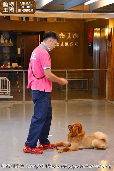 寵物訓練班_038