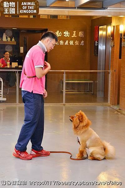 寵物訓練班_041