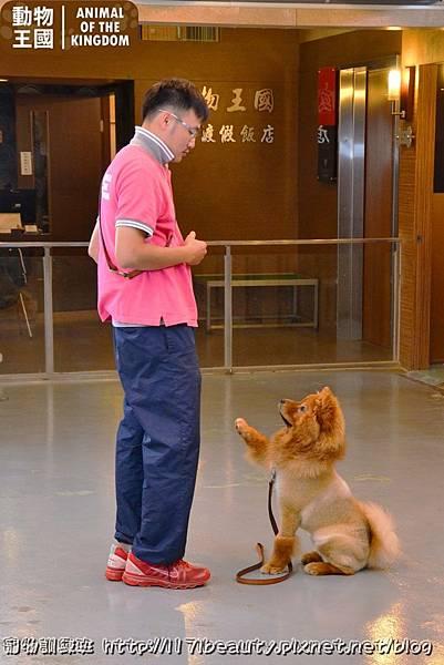 寵物訓練班_039