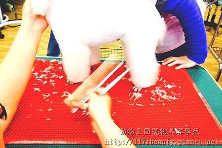 動物王國寵物美容學苑教學