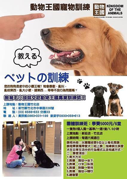 動物王國寵物訓練班dm