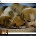 動物王國新生幼犬