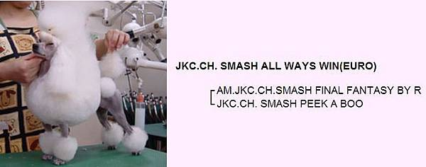 JKC.CH. SMASH ALL WAYS WIN