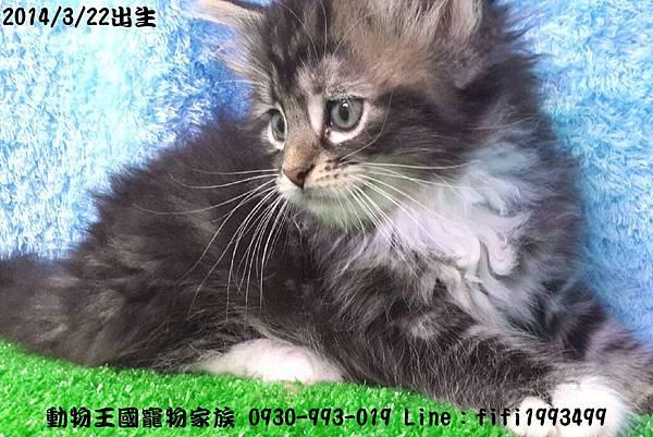 動物王國寵物家族012